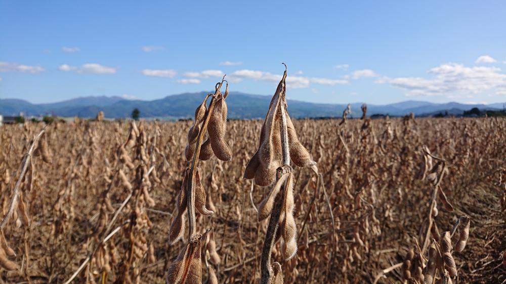 収穫間近:画像