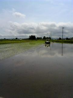 「田植えの時期がやってきました」の画像