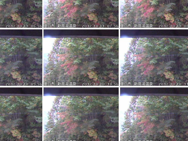 玄関前お天気カメラ再稼働(紅葉が何となく伝わる感じver):画像