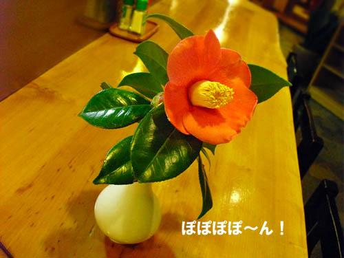 「咲いた〜♪」の画像