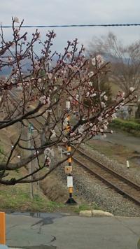 「梅の花」の画像