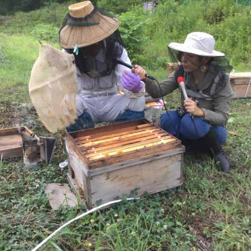 8/15(水)おらんだ専科情報紹介|みつばちさん・四釜屋敷蜜蜂園に行ってきました!