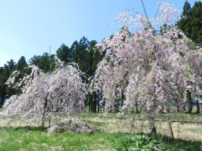 成田駅前は花盛りなり