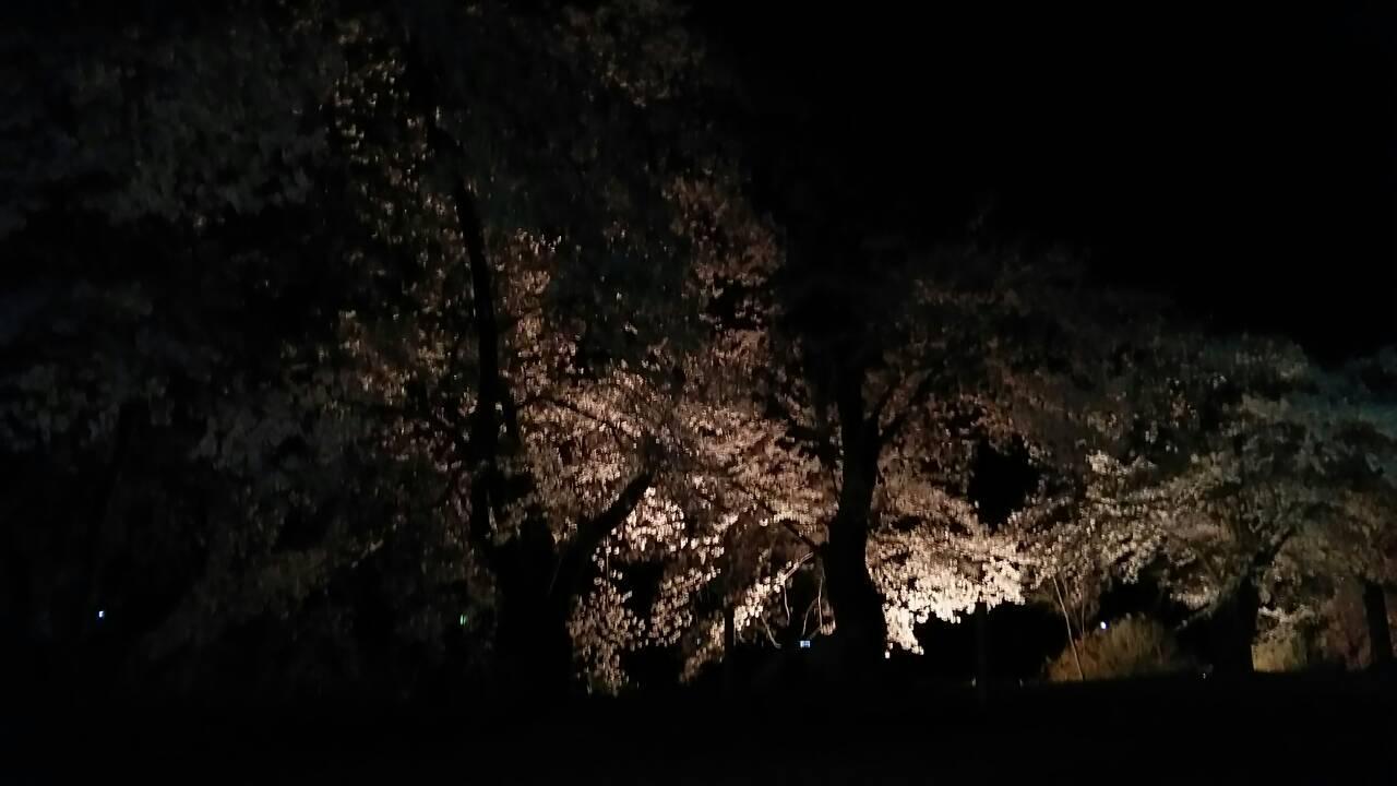 停車場ノート  夜桜見に来ました