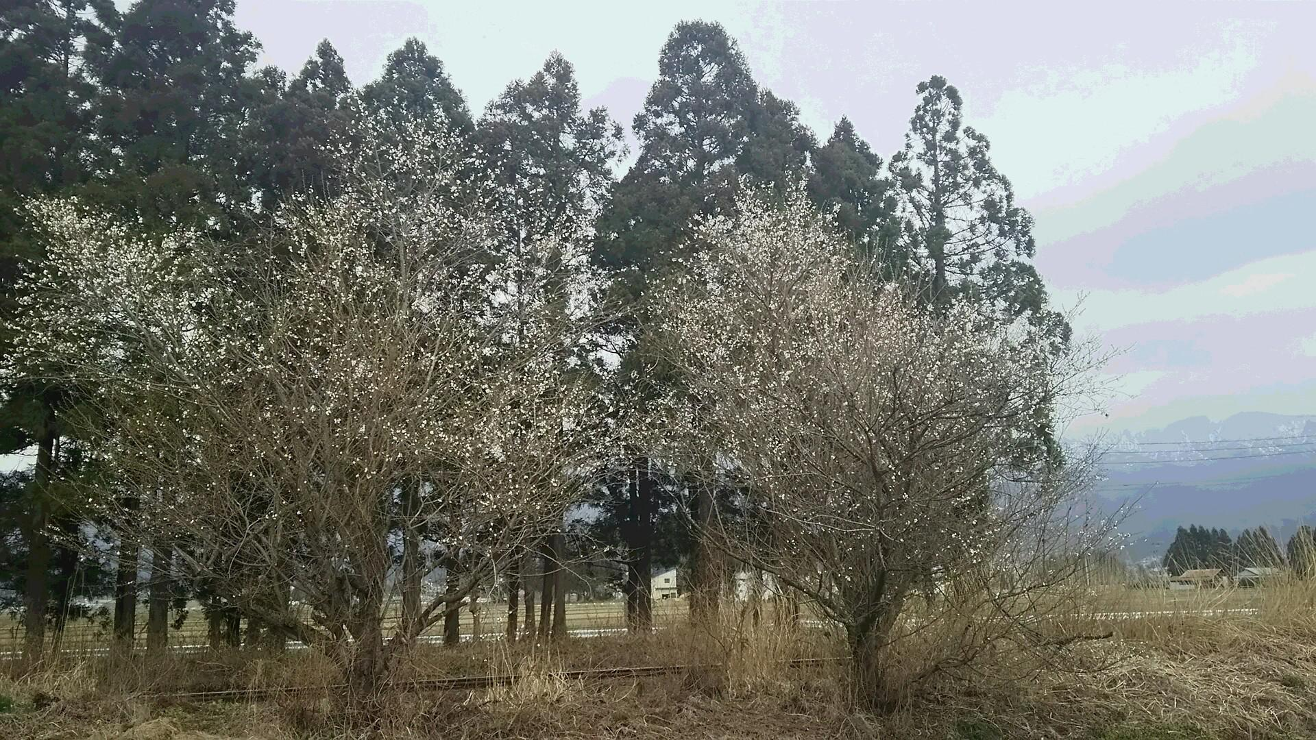 コロナの春 沈黙の春