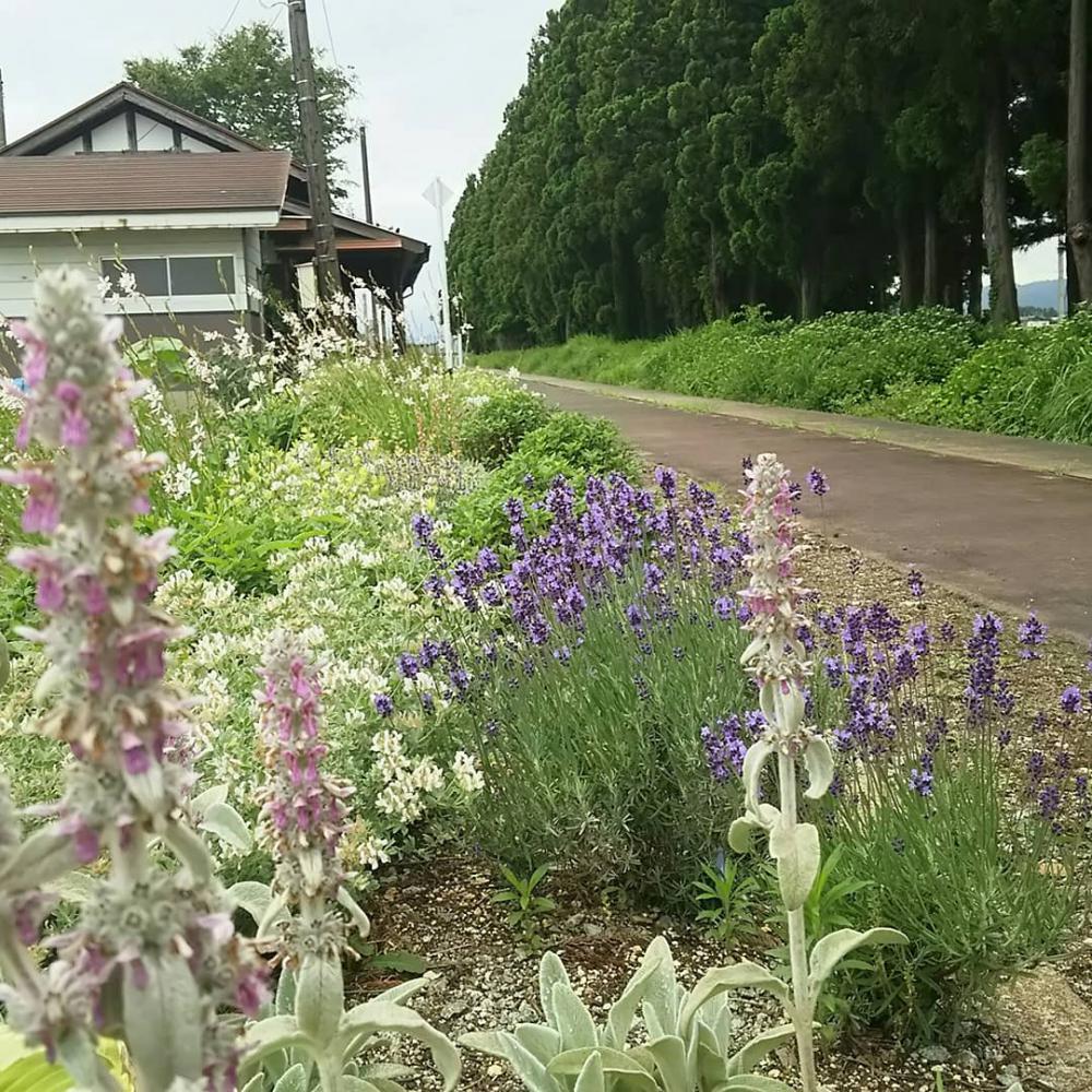 色んな花が:画像