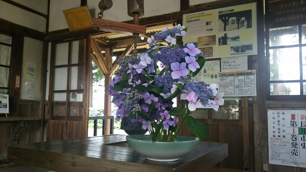 紫陽花のエスコート:画像