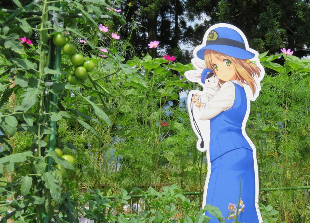りんごちゃん撮影会の3:画像