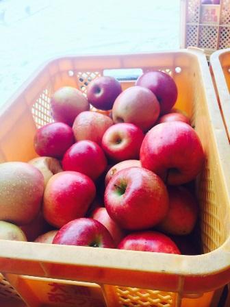 リンゴのジュースとワインの仕込みしてます:画像