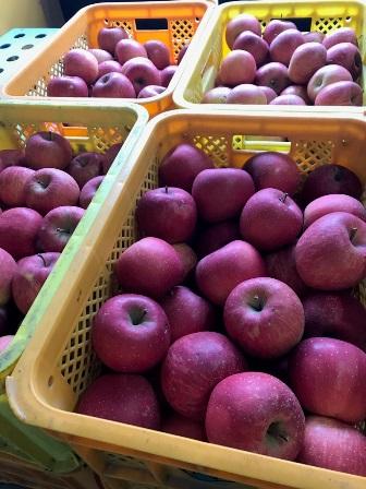 「リンゴジュース仕込み」の画像