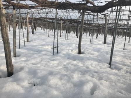 「残雪」の画像
