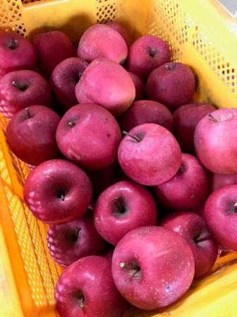 リンゴジュース仕込み真っ最中:画像