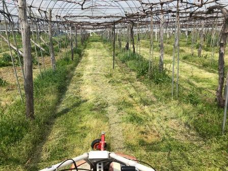 草刈り日和:画像