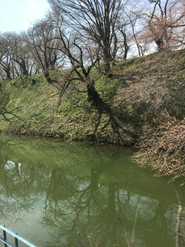 桜と電車旅