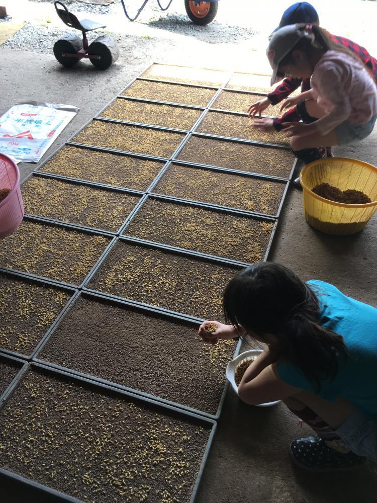 子ども農作業