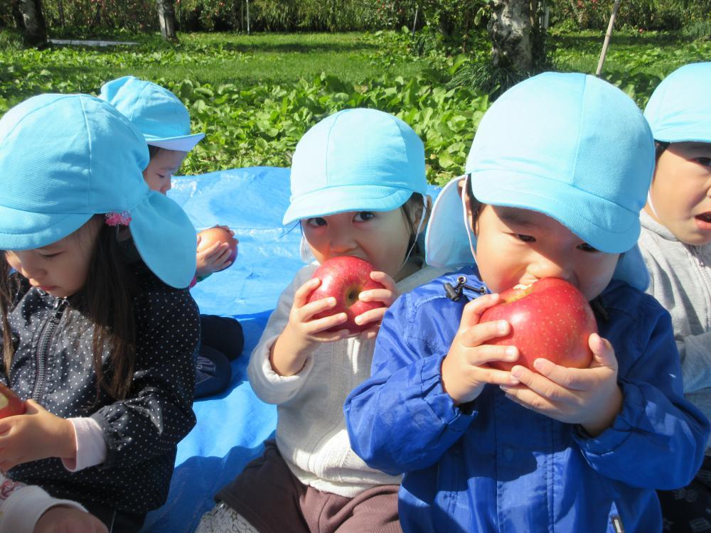 りんご狩りを楽しみました