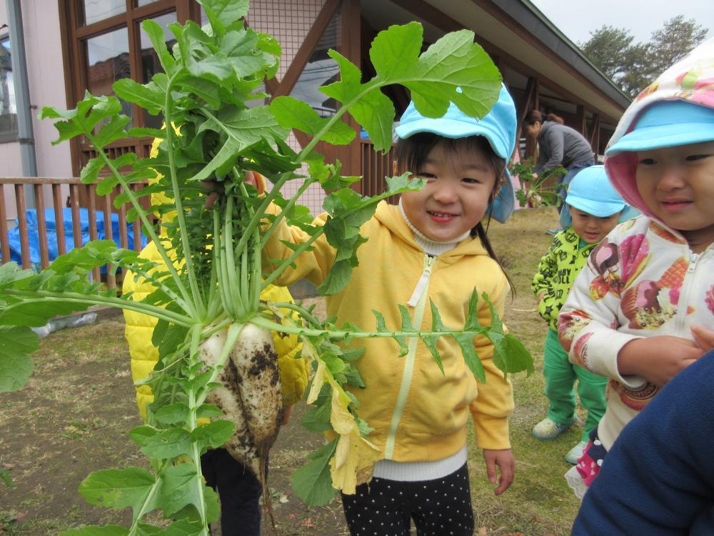 野菜の収穫をしました
