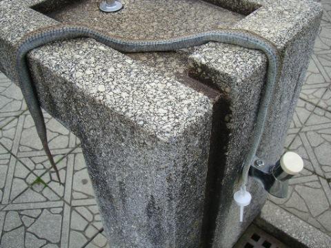 蛇の殺害現場  [水飲み場]