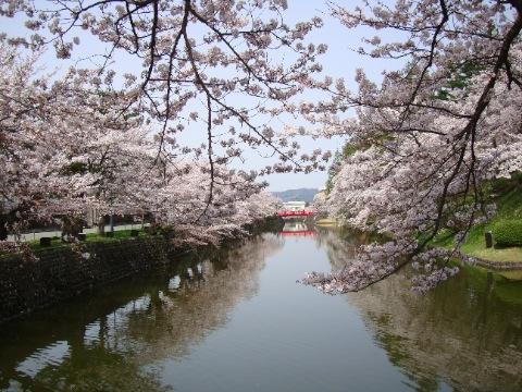 菱門橋とお堀の桜
