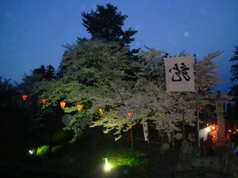 松が岬公園の夜桜