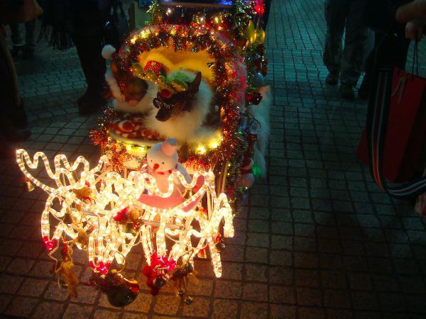 仙台でみかけるコスプレ犬