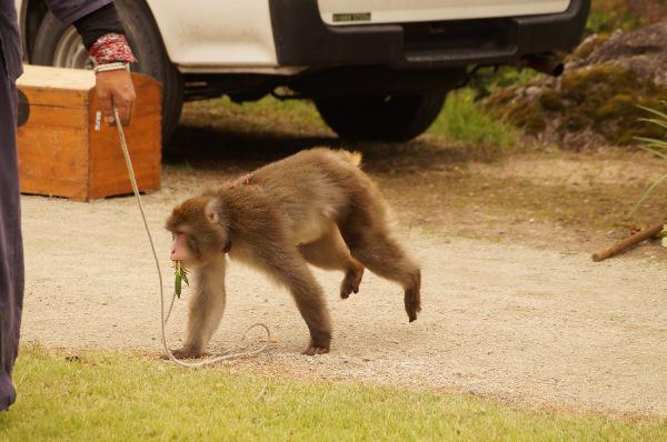 猿回し(あやめ公園)