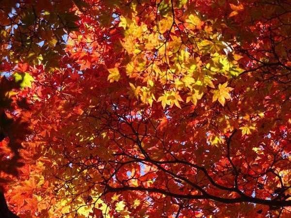 上杉神社、松が岬公園の紅葉