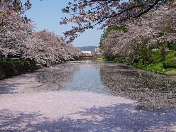 2017-4-30  松が岬公園の桜