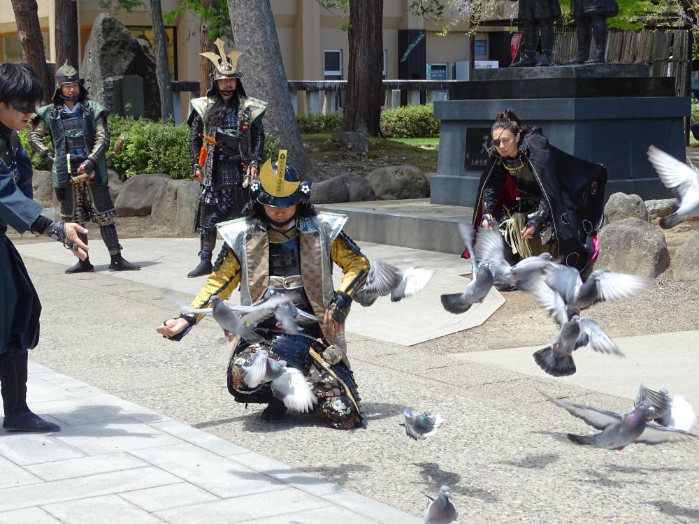 武将隊と公園の鳩
