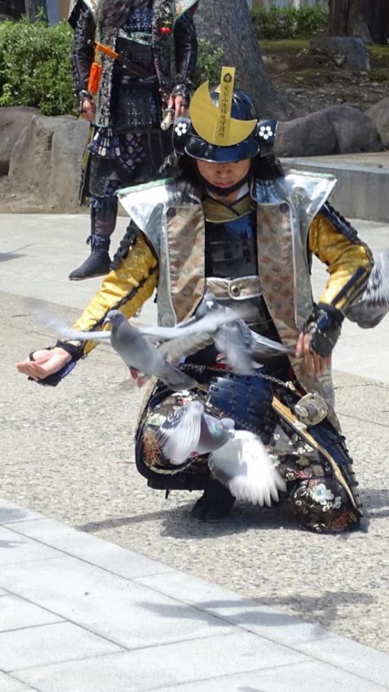 武将隊と鳩