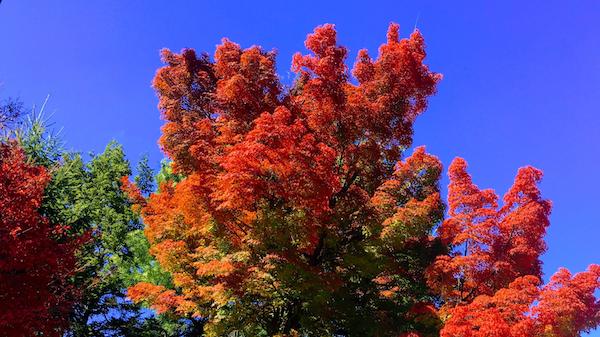 米沢市内の紅葉:画像