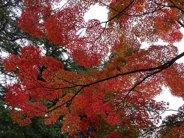 上杉神社の紅葉:画像
