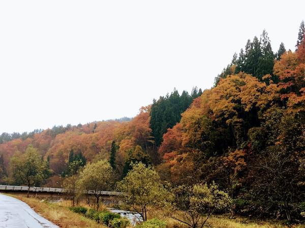 小野川温泉の紅葉