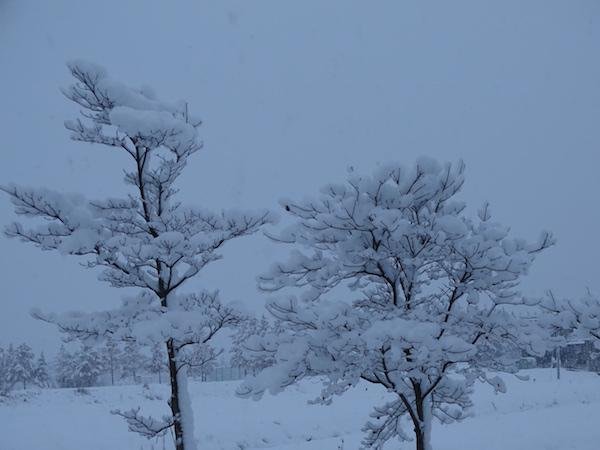市内の積雪