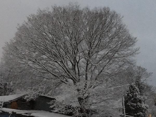 2017-12-20 雪景色