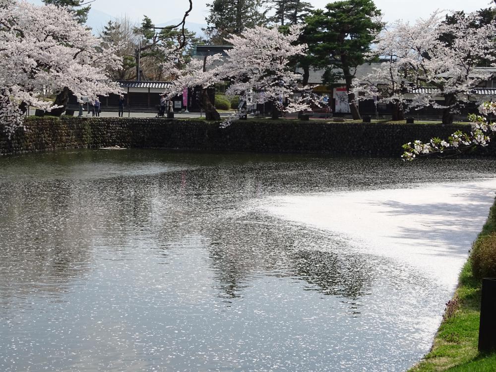 桜吹雪と花筏