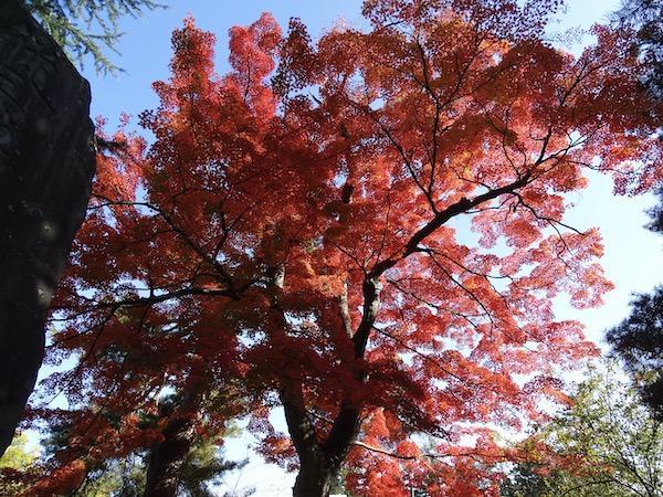 上杉神社の紅葉