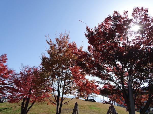 伝国の杜前広場の紅葉