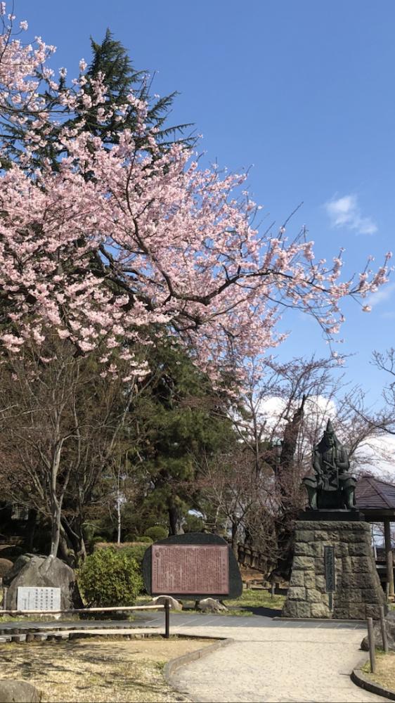 2020-4-9 上杉神社の桜
