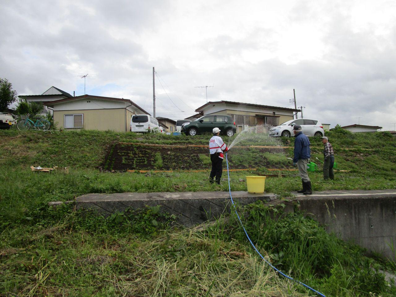 補植、水やり、除草作業の実施