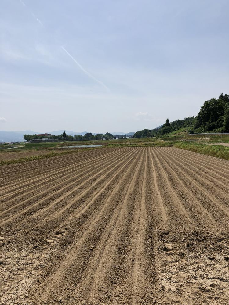 大豆播種:画像