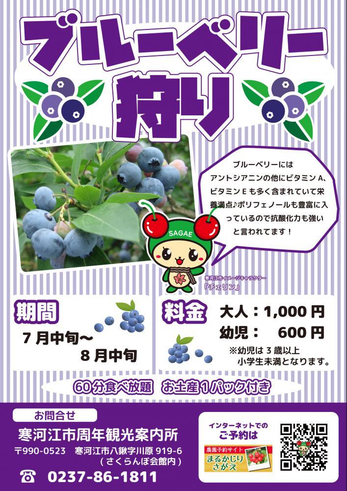 蓝莓狩猎:图片