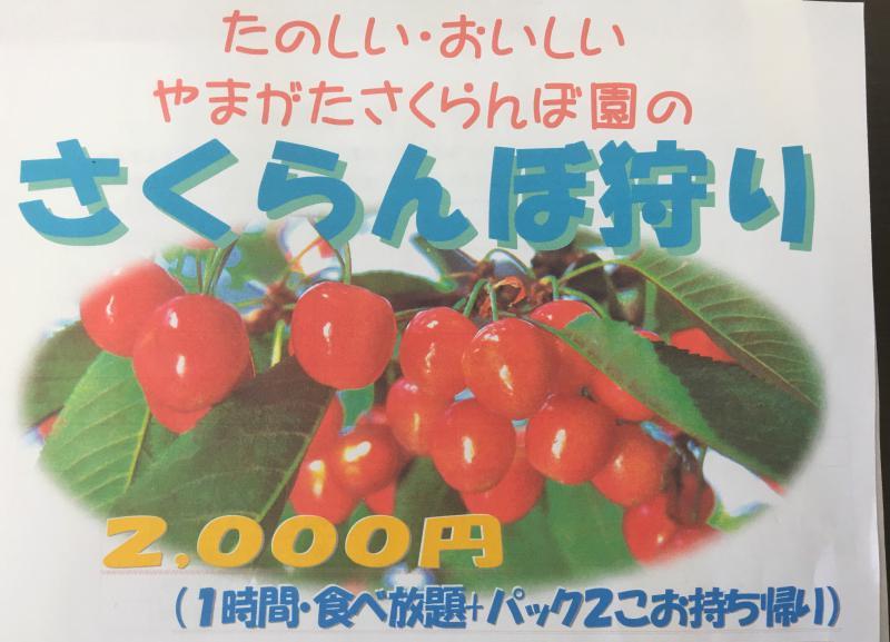 「400gのお土産さくらんぼ付 !!!!」山形さくらんぼ園 開園のお知らせ