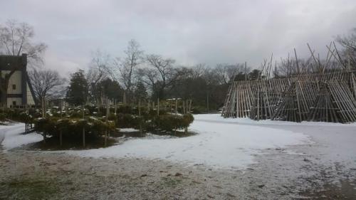 今日のつつじ公園・1月下期の予定