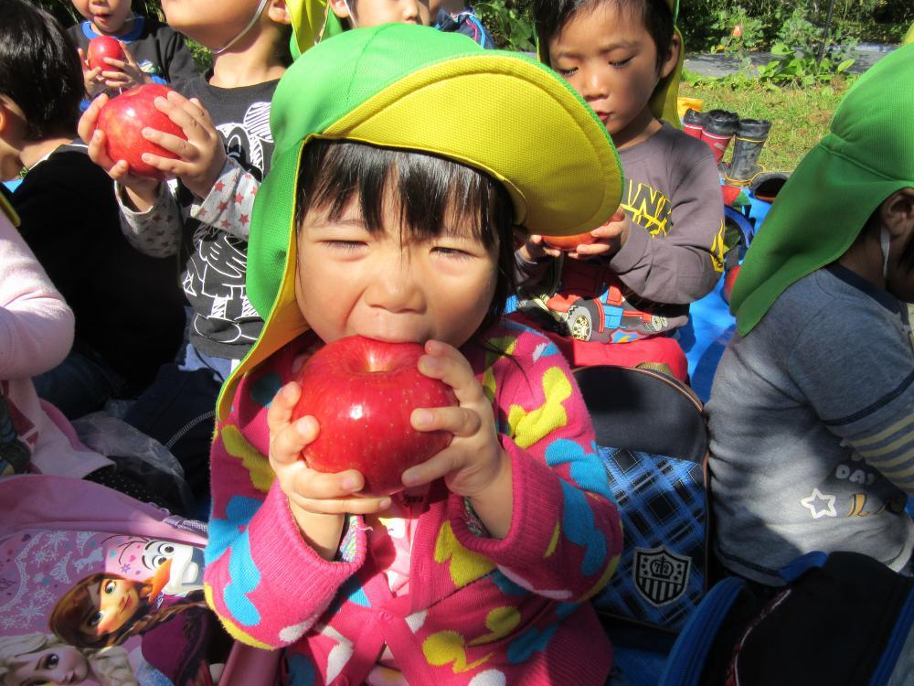 りんご狩りに行ってきました