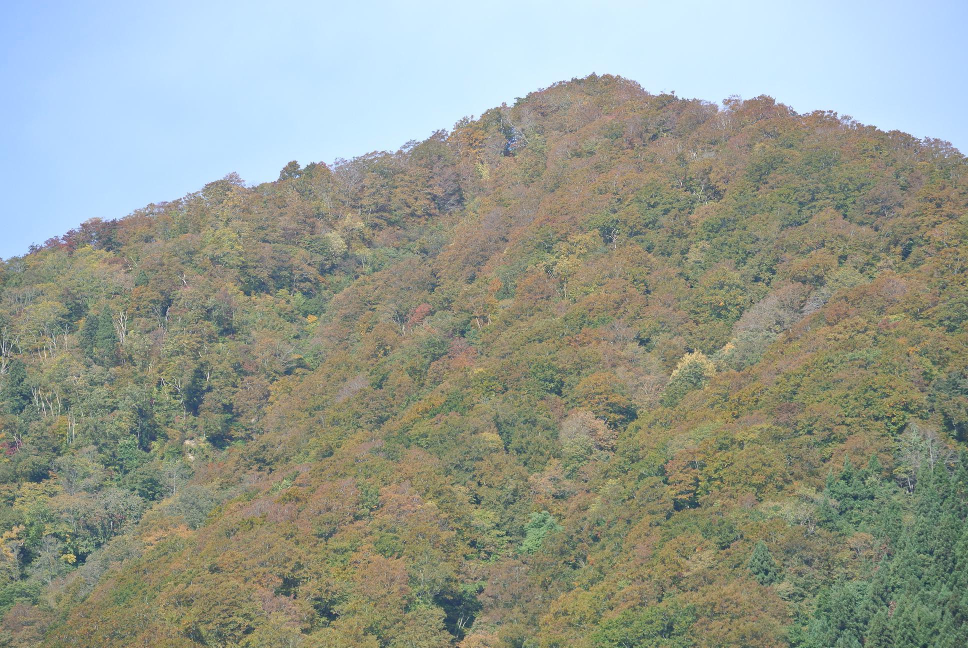 瀬見温泉から観た紅葉(10月23日(火))