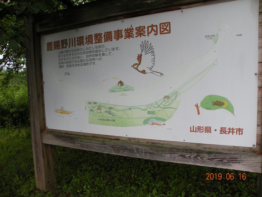 「野川の自然を愛する会」さん活動紹介