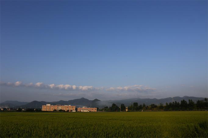 夏終盤頃の田園風景って感じですね。