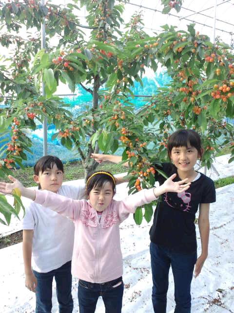"""2012/06/15 11:49/白布温泉一番最寄りの""""さくらんぼ"""" 鈴木農園"""
