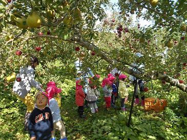 りんご狩りに行ってきました。